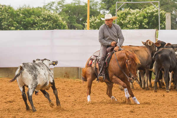 Hy Laredo - Co Reservado Campeão Baiano 2017/2018 - Categoria Aberta Livre